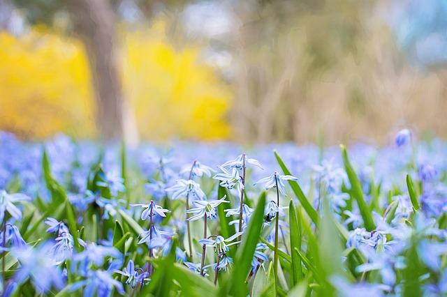 7 najciekawszych zapachowych nowości na wiosnę 2016