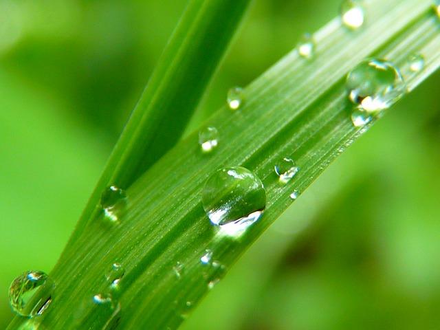 Gramy w zielone, czyli  lekkość, świeżość, naturalność